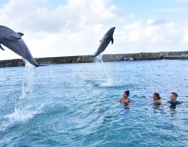 Our amazing experience at Dolphin Academy Curacao